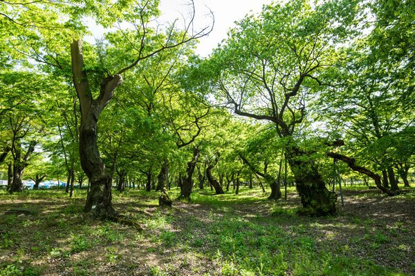 Gyerim forest in Gyeongju, South Korea - Astra Ferro, Healing with the Ancestors